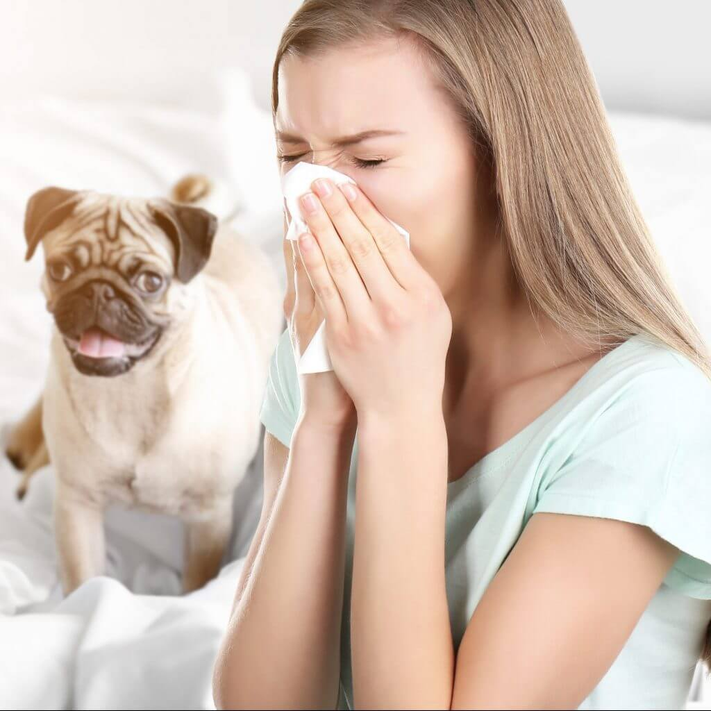 Hunde und Katzen als Auslöser