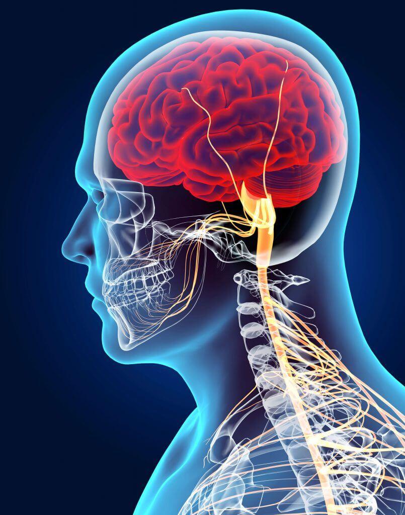 H1-Antihistaminika der 1. Generation können die Blut-Hirn-Schranke passieren